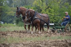 horse2big