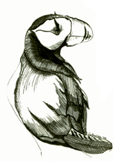 toucansm